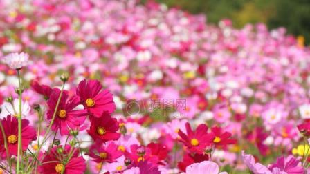 春游好去处---新乡县龙泉源