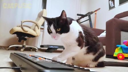 喵星人学着弹电子琴