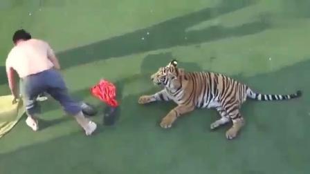 老虎 : 请你尊重一下我这个身份, 不要整天想着撸我……