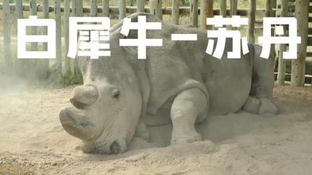 这个星球上最后一头雄性北方白犀牛--苏丹, 默默地离去☆航拍中国★旅行遇见☆