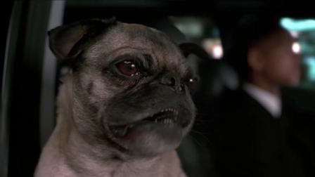 电影镜头中的巴哥犬, 长得真是太丑了