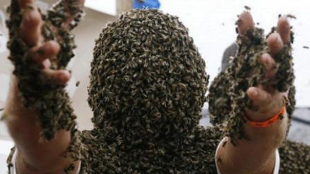 国外男子作手指捅马蜂窝!上千只蜜蜂瞬间出来!结果悲剧了