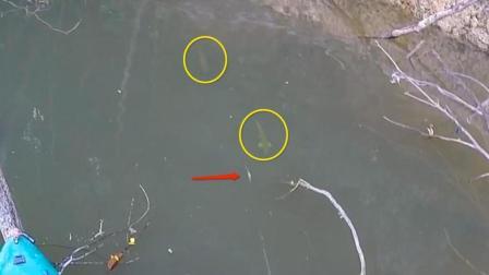 钓鱼: 两条鱼追着鱼饵过来