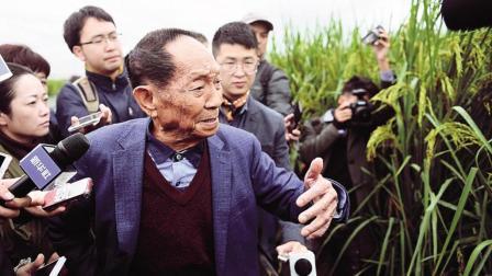 袁隆平又一重大突破, 种出2.2米高水稻, 外国专家: 太逆天