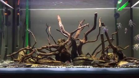 家居水景丨优雅的南美沉木造景缸