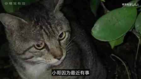 男子搬家没告诉猫咪, 再见时, 尴尬了!