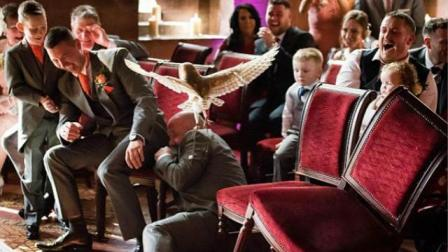 英国婚礼新人雇猫头鹰传递戒指 伴郎意外遭其袭击