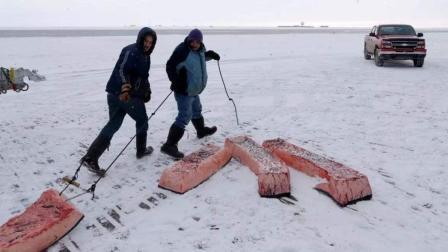 生活在北极圈爱斯基摩人, 餐餐生鲸肉, 腌海燕, 想吃个辣椒要91块