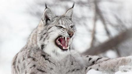1米高猛犬竟被凶猫一口咬死!
