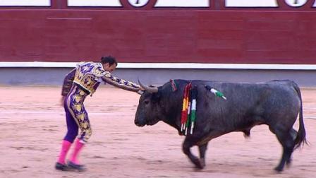 2015西班牙斗牛安东尼奥·费雷拉VS嫩枝(牛)