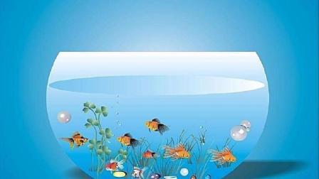 原创视频, 怎样养好观赏鱼, 开缸养鱼前千万不要忽视的几个小细节