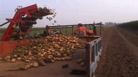 农村49岁大叔发明土豆收获机, 出口20多个国家, 年赚4000万