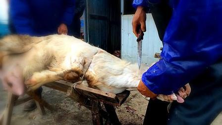野路子: 羊被宰前的哀嚎令人心悸, 这种屠宰方式考虑羊的感受了么