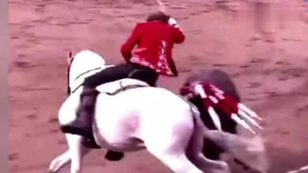 西班牙斗牛士骑马斗牛, 精湛的马术和精彩的斗牛相结合!