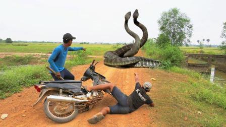 3个男孩开摩托车去找野味, 突然树丛中窜出这货, 被吓得不轻呀!
