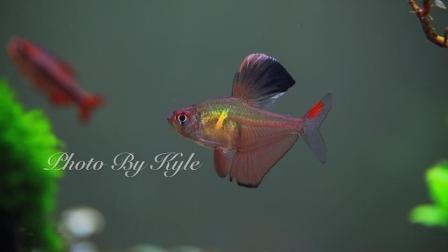 怎样养好观赏鱼, 硝化系统的基本知识, 鱼缸中的氨氮是怎么循环的