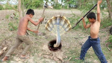 农村小哥俩去野外挖蛇, 发现洞口有一窝蛋, 挖下去一看不得了啊!