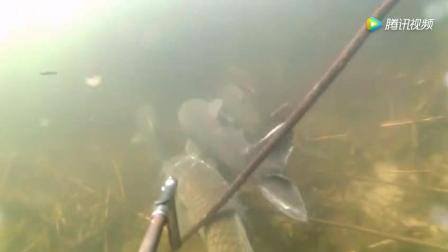 钓鱼: 悄悄的潜伏在大鱼身后, 冷不丁的给它们一下, 一条大鱼到手