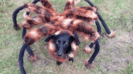 当小狗穿上这件衣服, 还没有一个人不怕的!
