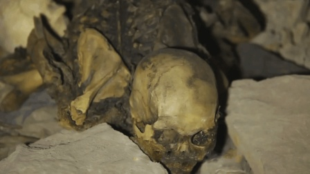 山西一山洞发现六万尸骨, 幸存者说出隐情, 令人咬牙切齿