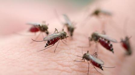 夏天到了,开始有蚊子了,教你一招,家里不再有一只蚊子