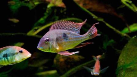 怎样养好观赏鱼, 新鱼缸该如何养水, 安全+高效+高成功率的开缸