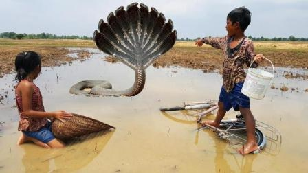 柬埔寨的小孩子牛得不得了, 去野外抓鱼遇见这货, 竟然毫不畏惧!