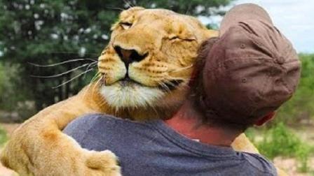 三年时间的分离, 再见面的时候, 狮子依然记得它的救命恩人!