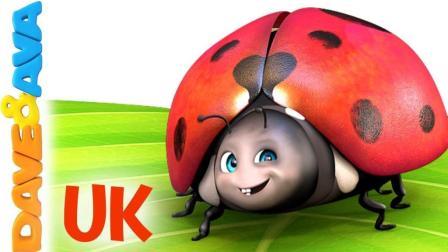 《五只小瓢虫》英语儿歌 幼儿早教