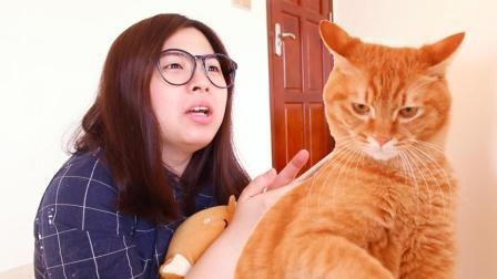 试用人猫交流器, 实时翻译猫咪竟秒懂! 下一秒却把主人整懵了