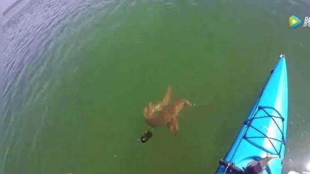 钓鱼: 一条大鱼引来水下巨物, 男子察觉不对劲, 赶紧剪断鱼线