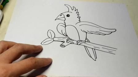 儿童简笔画入门: 零基础学画小动物——鹦鹉