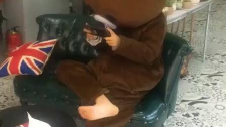 布朗熊: 学会了斗地主