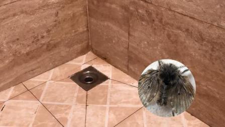 卫生间有这种小飞虫, 教你一招, 小飞虫有多少死多少, 一只都不留