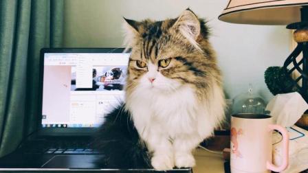 猫咪想跟主人玩却被无视, 气鼓鼓地站在电脑上捣乱, 再也哄不好了!