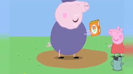 猪爷爷种花籽长出植物, 结果花籽被小鸟偷吃光啦, 猪爷爷好伤心!