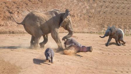 象妈妈为保护小象, 单挑两头河马, 最后结局结果令人意外!