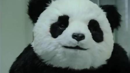 全程高能! 这大概是我见过脾气最暴躁的熊猫了