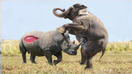 大象挑衅犀牛, 暴脾气的犀牛竟发起冲锋, 没想到大象一招直接搞定