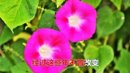 林翠萍一首经典情歌《让我爱你到永远》太好听了