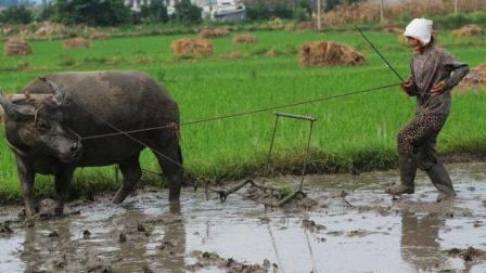 """农村谚语: """"初四下雨, 天天见雨"""", 古人总结关于天气的俗语太神奇!"""
