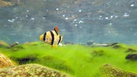 怎样养好观赏鱼, 养鱼先养水, 养水先要了解水, 酸碱度对鱼的影响