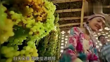 舌尖上的中国: 新疆吐鲁番葡萄干, 甜到心坎里