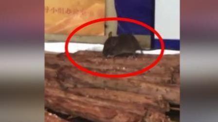 恶心! 老鼠钻进柜台吃鸭脖 烤鸭脖店铺被查封
