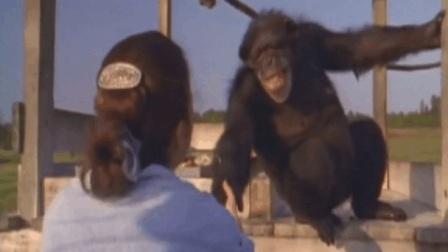 放肆地告诉你, 我终于等到了你! 黑猩猩对救命恩人18年的等待