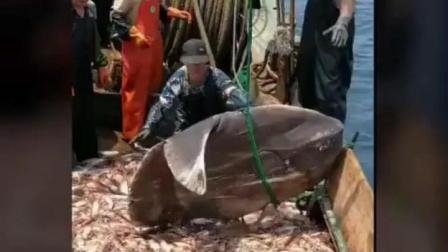渔民意外捕到这种鱼后直冒冷汗, 只能赶紧放生