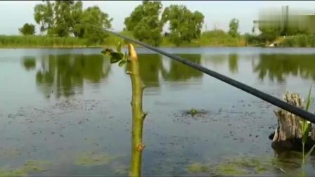 来看看有多少钓鱼人, 钓鱼是看漂还是看鱼的呢