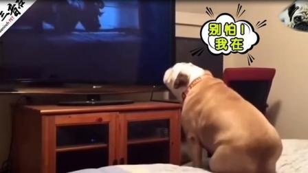 【阅后即狗】狗子在家看恐怖片, 不仅镇定自若, 还疯狂吐槽人演技差