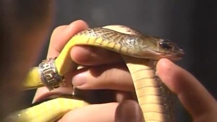 蛇妖被林正英破了法力, 变成小蛇, 同类对它虎视眈眈