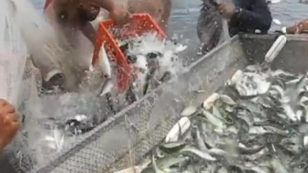 钓鱼: 哥俩是来搞笑的吧, 多大的鱼把人都拽下去了!
